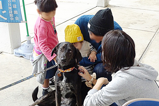 DSC02486 - 参加犬