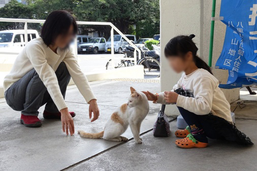 DSC02553 - 野良猫さん