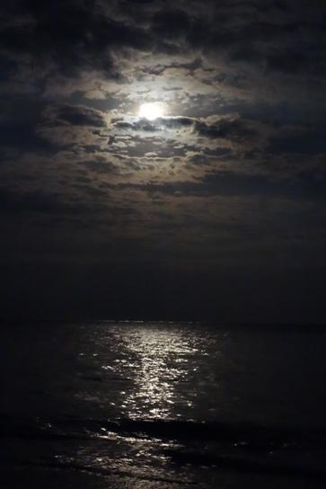 DSC03759 - 月の光