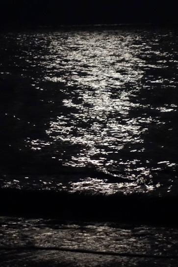 DSC03761 - 月の光