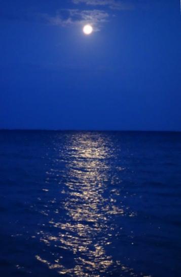 DSC03773 - 月の光