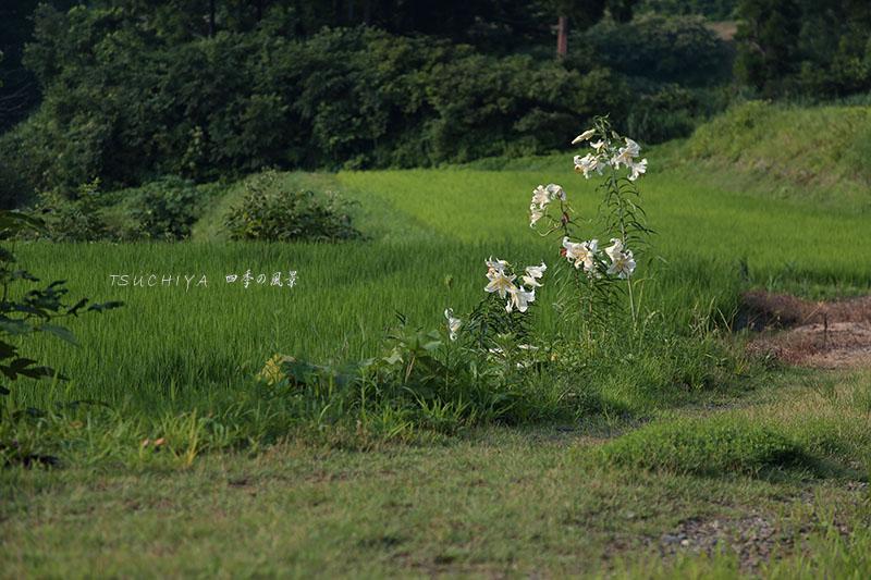 松之山 2