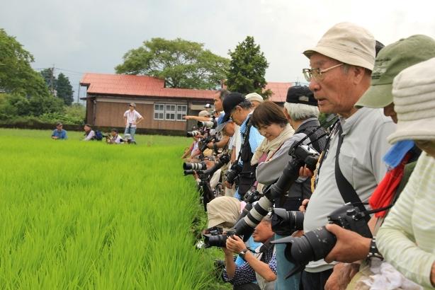 写真20-5大勢のカメラマン