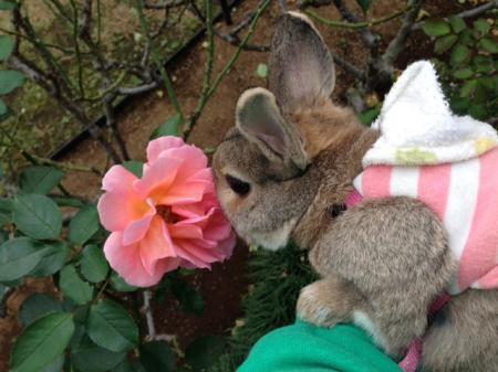 まだバラが咲いているんだね(o^^o)