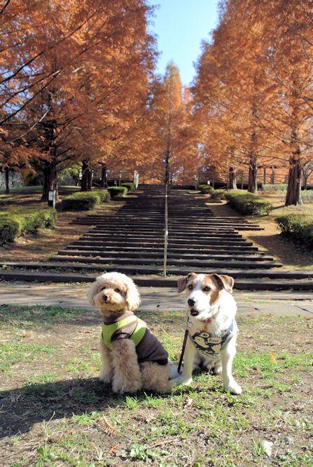 2014長岡公園1307