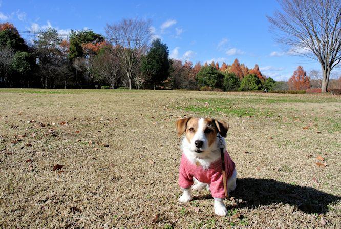 2014長岡公園1328