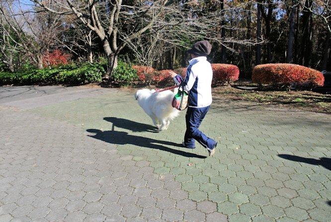 2014長岡公園1337