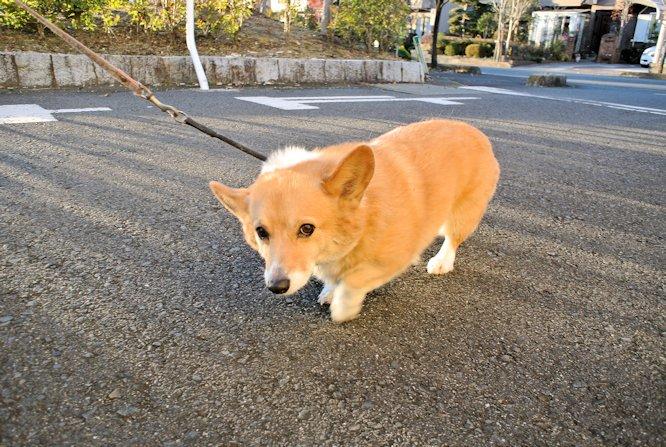 2014散歩088