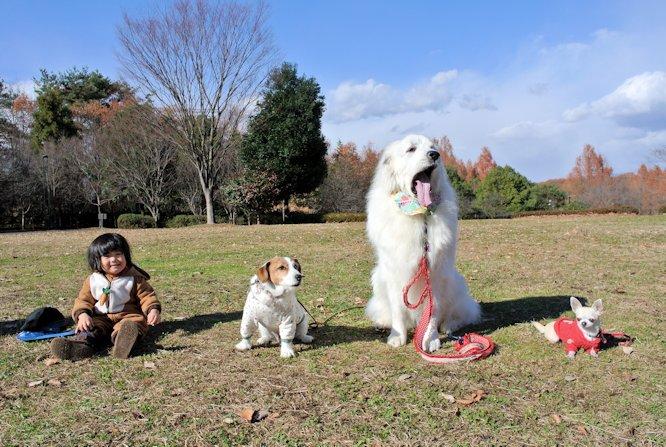2014長岡公園1347