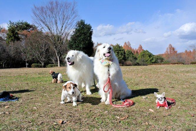 2014長岡公園1348
