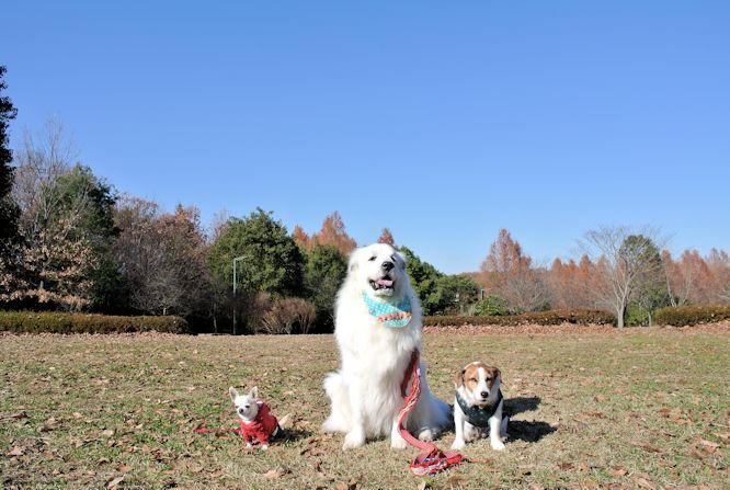 2014長岡公園1351