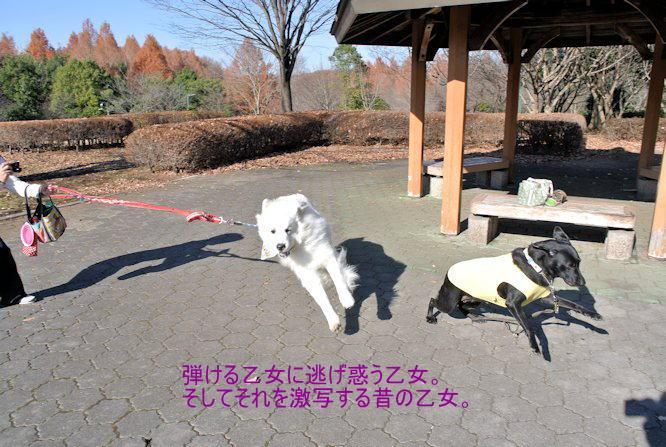 2014長岡公園1353