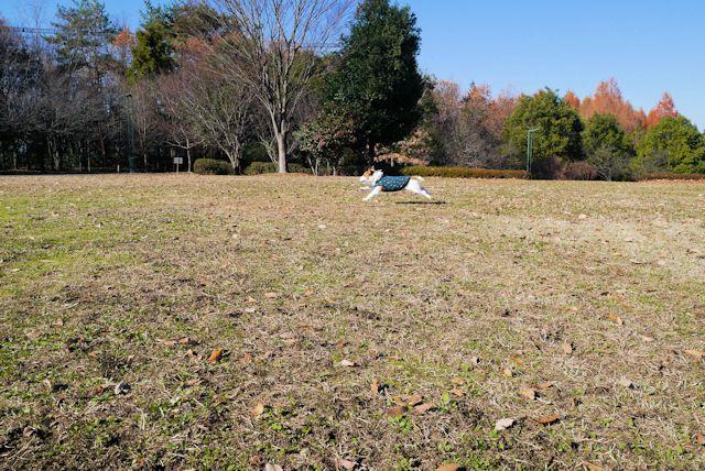 2014長岡公園1358
