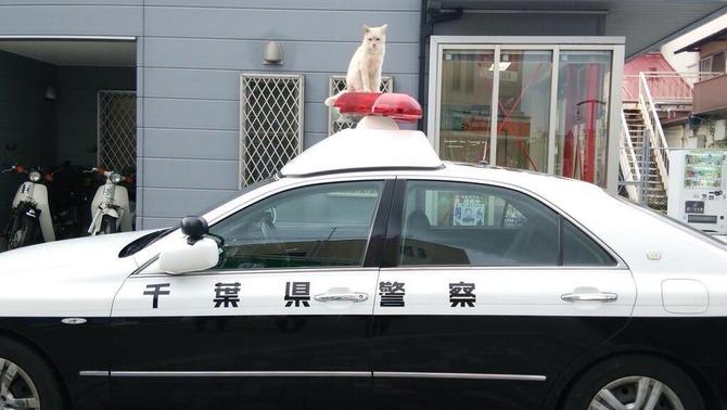 ツイッター 馬鹿 逮捕 猫