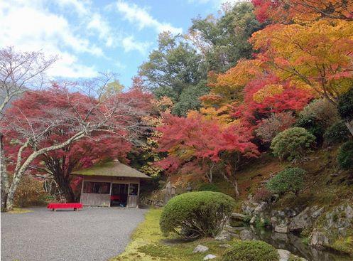 白龍園の紅葉
