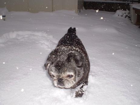 雪の中歩いた