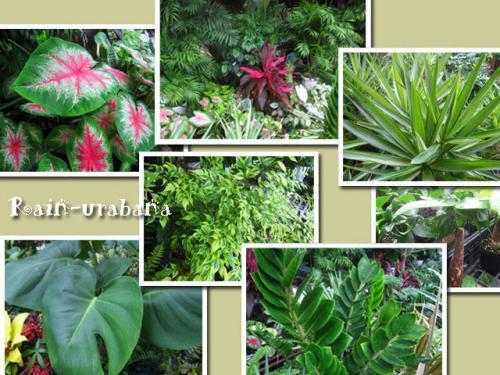 観葉植物ワールド (^ ^V