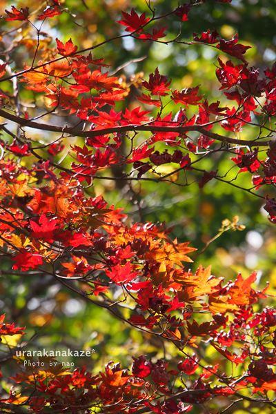 剣山にて 紅葉