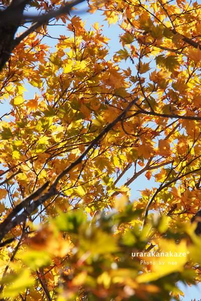 剣山にて 黄葉