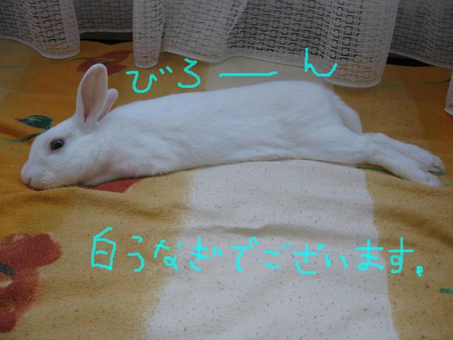 snap_usablog7716_20136295315.jpg