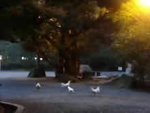 6:16 神鶏