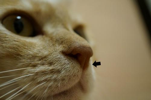 みっくんの鼻毛?