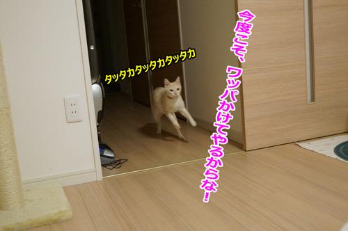 デカ☆あーちゃん登場!