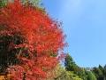 野出の紅葉