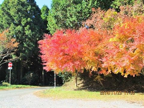 金峰山山頂の紅葉