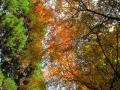 金峰山下りの紅葉
