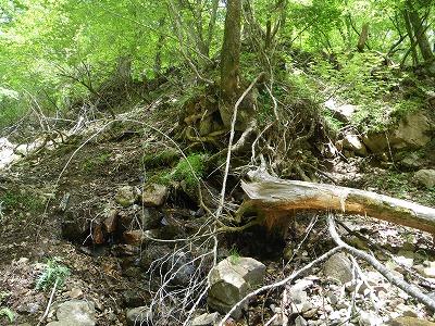 木の根元から水が湧き出している