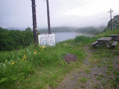 湖畔のニッコウキスゲ
