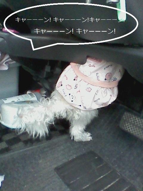 momo_20130616191835.jpg