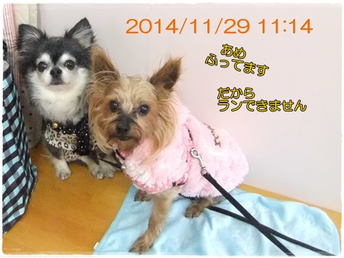 2014_1201moco&グッピ-0003