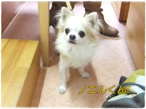 2014_1201moco&グッピ-0011