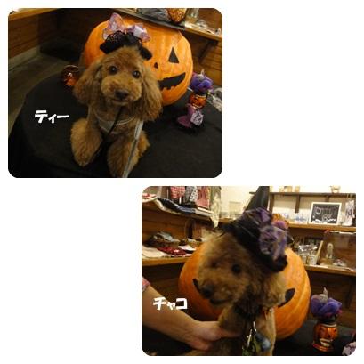 2013-10-127.jpg