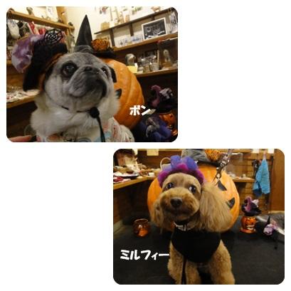 2013-10-128.jpg