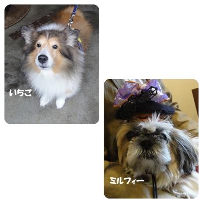 2013-10-130.jpg