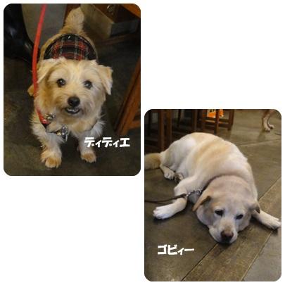 2013-10-139.jpg