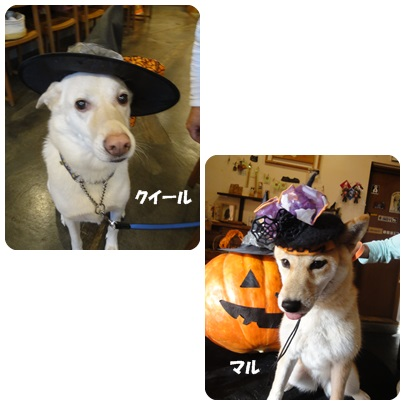 2013-10-154.jpg