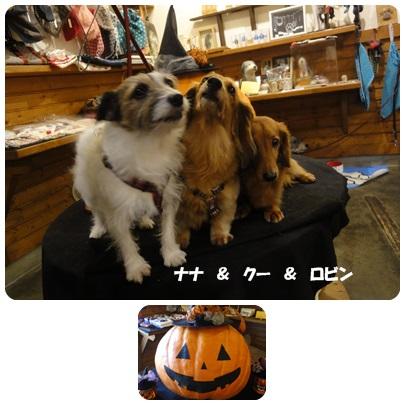 2013-10-156.jpg