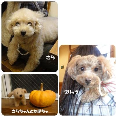 2013-10-161.jpg