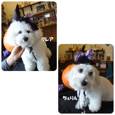 2013-10-163.jpg