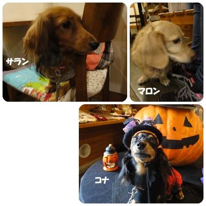 2013-10-165.jpg