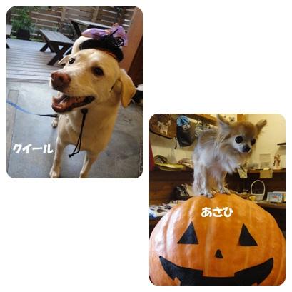 2013-9-119.jpg