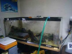観賞魚の水槽可動停止20130902-1