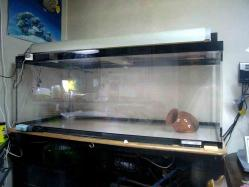 観賞魚の水槽可動停止20130902-3b