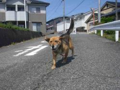 散歩20130425-2