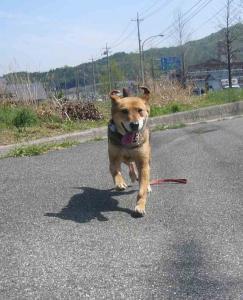 散歩20130425-5