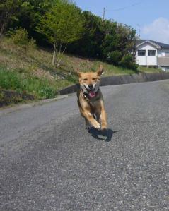散歩20130426-2